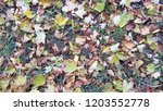 dry autumn leaves background | Shutterstock . vector #1203552778