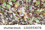 dry autumn leaves background | Shutterstock . vector #1203553078