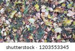 dry autumn leaves background | Shutterstock . vector #1203553345
