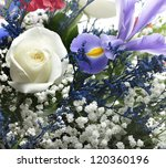 Colorful Flowers ,Close Up For Background - stock photo