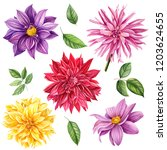 autumn flowers  set of dahlia... | Shutterstock . vector #1203624655