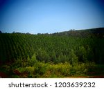 lush green forest in blue skies | Shutterstock . vector #1203639232