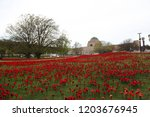 62 000 Red Knitted Poppies...