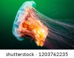 lion's mane drifting underwater ... | Shutterstock . vector #1203762235