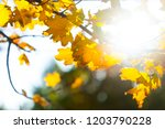autumn background with a close... | Shutterstock . vector #1203790228
