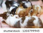 sleeping puppies tired pets.... | Shutterstock . vector #1203799945