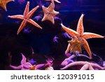 starfish   Shutterstock . vector #120391015