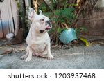 french bulldog  focus selection | Shutterstock . vector #1203937468