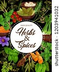 seasoning herbs and spices or... | Shutterstock .eps vector #1203941032