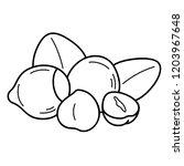 hazelnut. vector flat outline...   Shutterstock .eps vector #1203967648