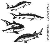 set of sturgeon fish... | Shutterstock .eps vector #1204054918