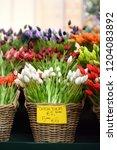 the famous amsterdam flower...   Shutterstock . vector #1204083892