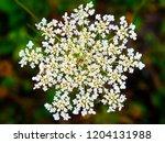 flowers in autumn | Shutterstock . vector #1204131988