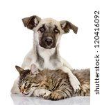 Stock photo the dog embraces a cat isolated on white background 120416092