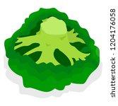 fresh broccoli icon set.... | Shutterstock .eps vector #1204176058