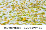 the first snow  late autumn ... | Shutterstock . vector #1204199482