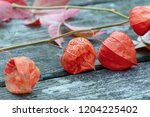 half decayed flowers of a... | Shutterstock . vector #1204225402