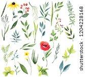 watercolor herbal set of poppy  ... | Shutterstock . vector #1204228168