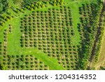 macadamia nut farm aerial drone ... | Shutterstock . vector #1204314352
