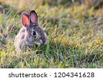 A Cute Rabbit Surrounded By...