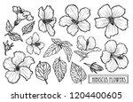 decorative hibiscus flowers set ... | Shutterstock .eps vector #1204400605