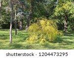"autumn park ""oleksandriya"" in... | Shutterstock . vector #1204473295"