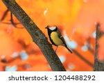 portrait of a small beautiful... | Shutterstock . vector #1204488292