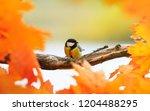 portrait of little beautiful... | Shutterstock . vector #1204488295