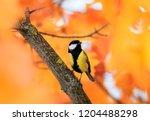 portrait of a small beautiful... | Shutterstock . vector #1204488298