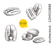 pecan nuts set. peeled core and ...   Shutterstock .eps vector #1204510888
