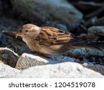 close up of a sparrow | Shutterstock . vector #1204519078