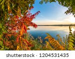 colorful autumn background | Shutterstock . vector #1204531435