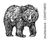 shaggy bear. sketch. engraving... | Shutterstock .eps vector #1204573855