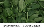 fresh spinach leafs close up ... | Shutterstock . vector #1204595335