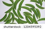 sugar snap peas rotating on... | Shutterstock . vector #1204595392