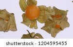 cape gooseberry  physalis ... | Shutterstock . vector #1204595455