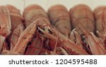 langoustines isolated on white... | Shutterstock . vector #1204595488