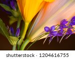 orange flowers  buds close up ... | Shutterstock . vector #1204616755