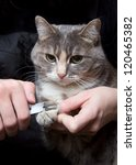 Stock photo clipping claws of a cat a necessary concern for pet 120465382