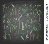 set of field plants on a... | Shutterstock .eps vector #1204873075