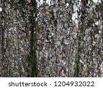 bark texture. nature wallpaper. ... | Shutterstock . vector #1204932022