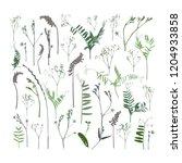 set of dried flowers... | Shutterstock .eps vector #1204933858