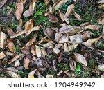 autumn leaves nature... | Shutterstock . vector #1204949242
