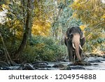 elephant in northern thailand | Shutterstock . vector #1204954888