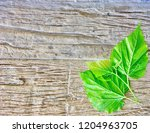 mulberry background on a plain... | Shutterstock . vector #1204963705