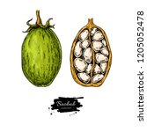 baobab vector superfood drawing.... | Shutterstock .eps vector #1205052478