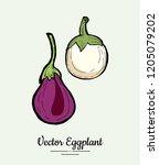 eggplant   hand drawn... | Shutterstock .eps vector #1205079202