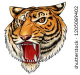 hand drawn tiger isolated on...   Shutterstock .eps vector #1205089402
