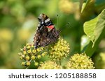 butterfly on top of the flowers ... | Shutterstock . vector #1205188858
