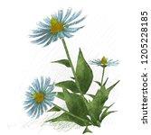 2d illustration. decorative... | Shutterstock . vector #1205228185